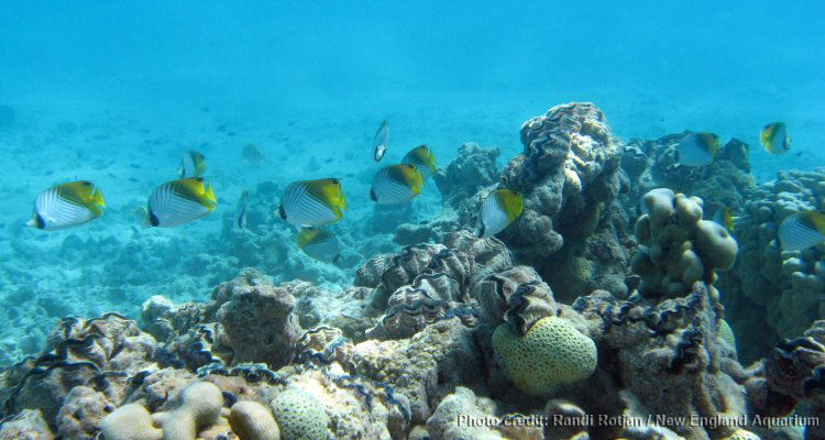 Phoenix Islands Marine Protected Area